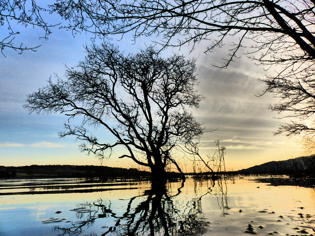 tree in Hazelwood Sligo Ireland